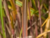 bambus_11