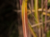 bambus_12