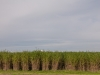 bambus_3