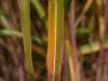 bambus_9