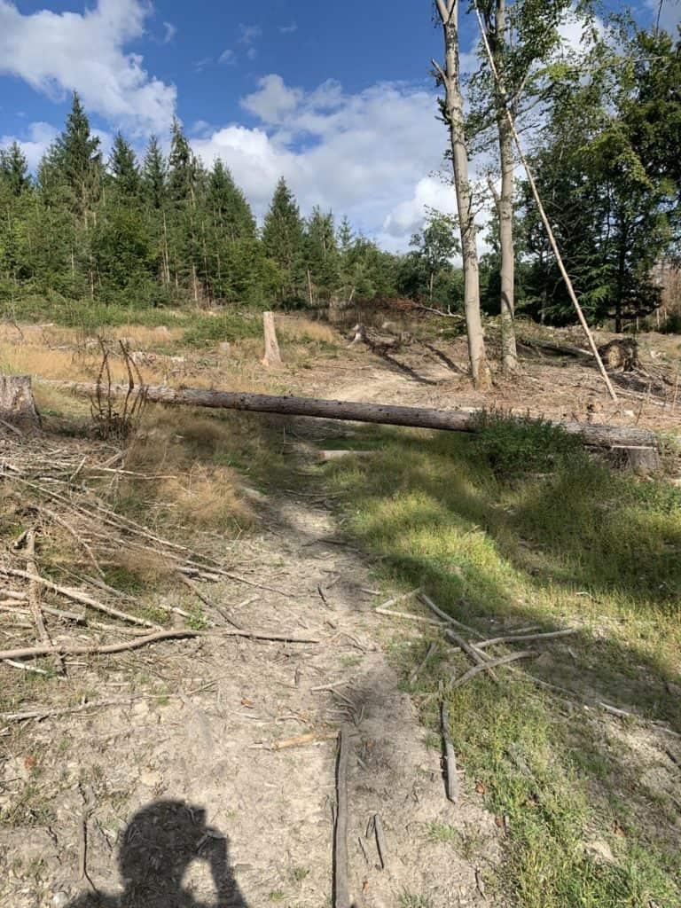 Baumstamm versperrt den Weg